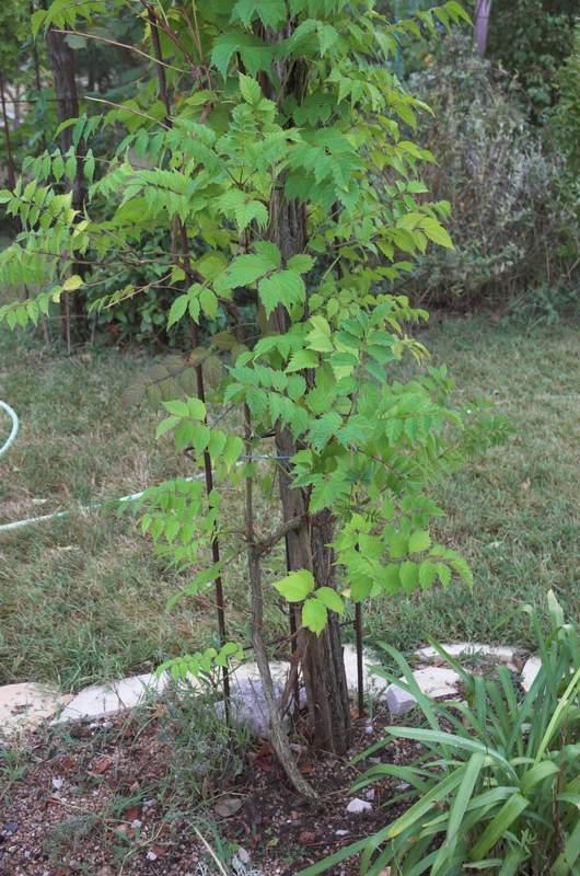 Utilisation des fers b ton for Cendre pour le jardin