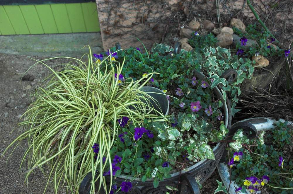 Plantes d 39 hiver ext rieur petits espaces et jardins en for Plante pot exterieur hiver
