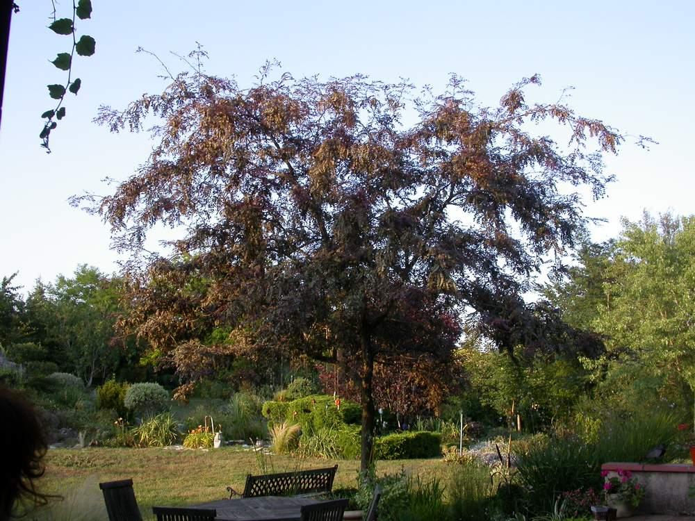 Petit arbre pour ombre coin tranquille am nager au for Arbre decoratif pour jardin