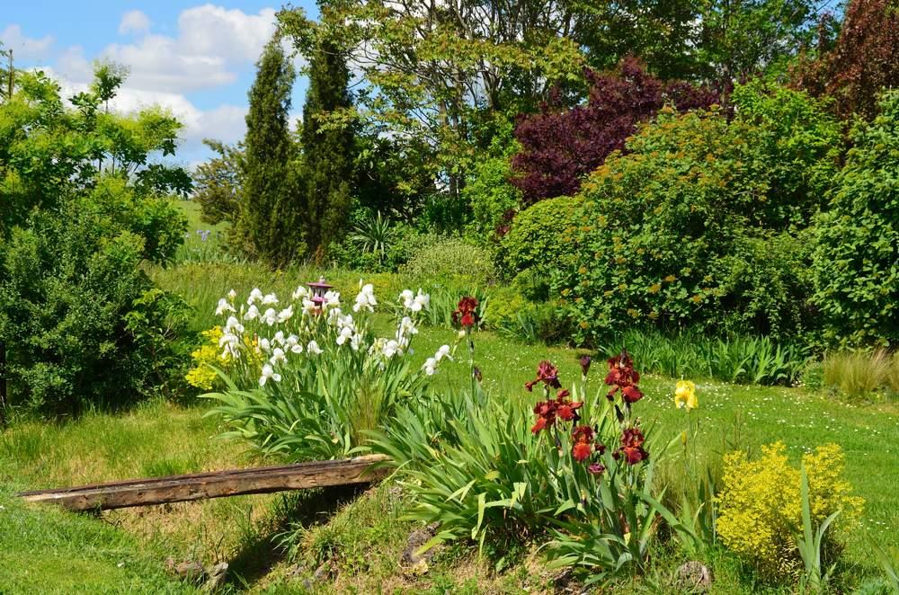 Les iris en situation dans le jardin for Dans le jardin
