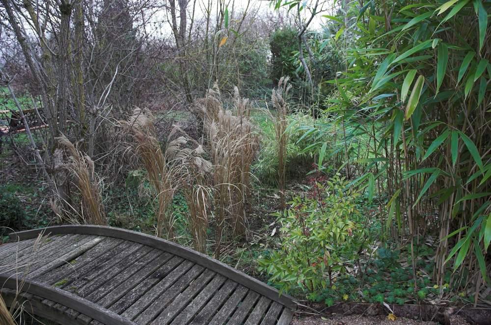 l 39 est du jardin de l 39 utilisation des bambous dans le lauragais le journal d 39 en galinou. Black Bedroom Furniture Sets. Home Design Ideas
