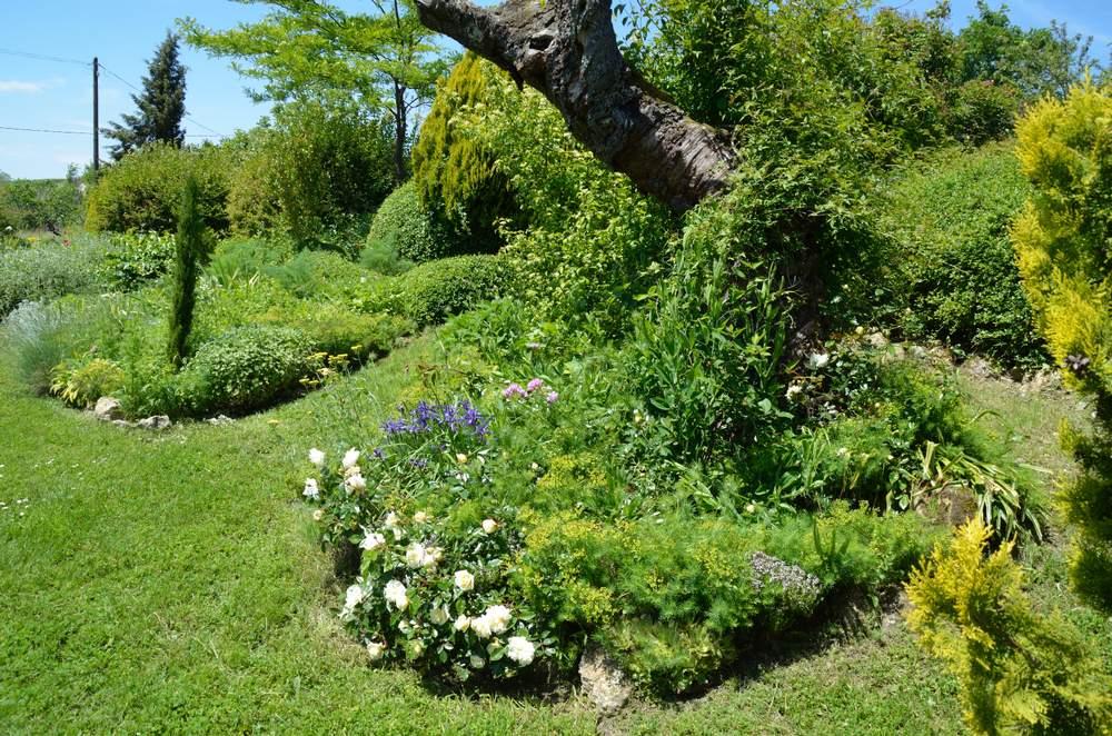 Aide taille rosier grimpant queen lisabeth au jardin - Taille rosier grimpant ...
