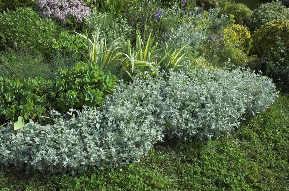 Quoi Planter Dans Une Terre Argileuse bien planter dans un sol argileux - au jardin, forum de